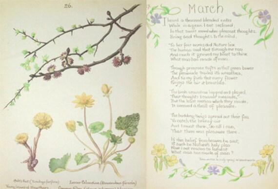 Vintage Print. Vintage paper Ephemera. Vintage Book Plate. Vintage Botanical Book Plate.Drawing from a Naturalists Diary 1906