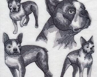 BOSTON TERRIER SKETCH- Machine Embroidery Quilt Blocks (AzEB