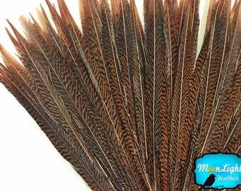 """Natural Tail Feathers, 10 Pieces - 8-10"""" Natural Golden Pheasant Tail Feathers : 2229"""