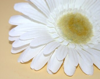 1 White Daisy
