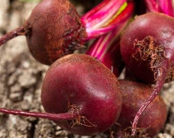 Organic Dark Red Detroit Beet Seeds