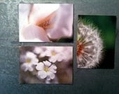 Nature Flower Postcard Set of 3 - Macro Photo, White, Green, Iris, Wedding, Dandelion, Cards, Hello, Notes, Nature Photos, Garden, Botanical