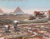 Egypt Feast on the Pyramids Vintage Postcard features Egyptians working in the fields, a camel, and Pyramids in background - Old Postcard