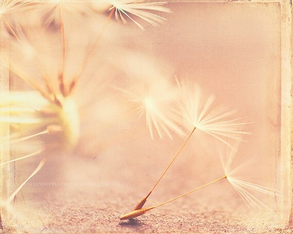 nature photography, romantic dandelion photo, Let's grow old together, hazy pink soft yellow peach apricot love weddings, babys room, nature