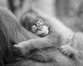 Safari Nursery Art, SLEEP...