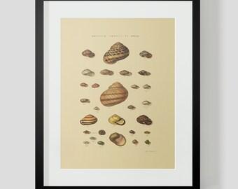 Vintage Shells Ocean Sea Clams Snails Plate 23