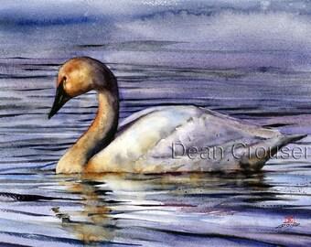 TRUMPETER SWAN Watercolor Print by Dean Crouser