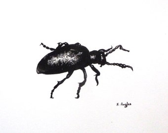 Oil beetle original charcoal sketch, original art, charcoal drawing, pencil drawing, insect art, beetle drawing, black and white, entomology