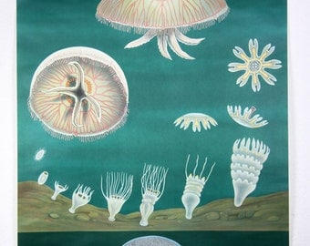 pulldown canvas Jellyfish print poster chart wall hanging amazing