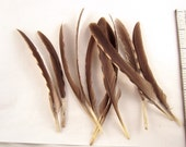 10 Natural Assorted grouse wing Feathers K187 dreamcatcher feathers smudge feathers craft feathers
