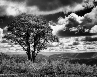 Mountaintop View Nature Photography, Black and White Landscape, Clouds, Tree photography, Flagstaff Mountain, Office Wall Decor