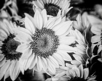 Black and White Flower Print or Canvas Art, Black and White Sunflower Decor, Country Kitchen Decor, Sunflower Picture, Black and White.