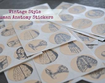 24 vintage HUMAN ANATOMY Organs/Bones Seals-stickers