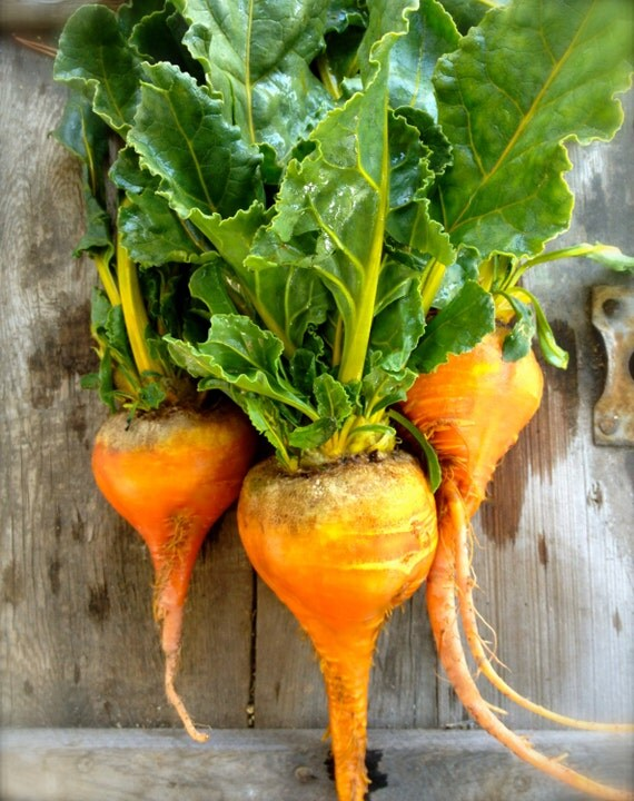 Organic Heirloom Sweet Golden Beets Rare Best Seller