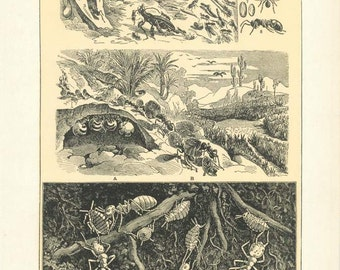 "Digital Download ""Ants"" Illustration (c.1900s) - Instant Download of Ants and Ant Hills, Illustrated Insects"