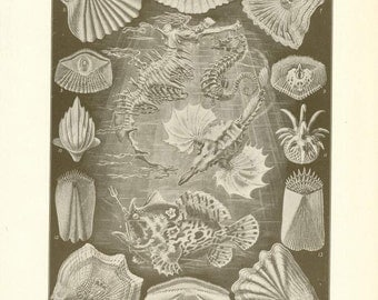 """Digital Download """"Ichthyology"""" Illustration (c.1900s) - Instant Download of Ocean Creatures Illustrated Book Page"""
