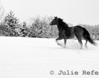 Horse Photograph - Black and White Horse Photography Equine Art Print Snow Day