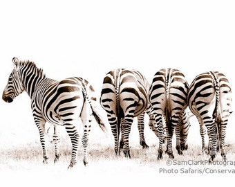 Zebra Photograph, Wall Art, African Wildlife Photo, African Zebra, Safari animals