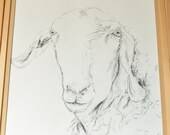 Ewe looking at you, Sheep Drawing, RESERVED LISTING for Jane and Tim