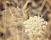 Queen Anne's Lace photo, Queen Anne's Lace print, Queen Anne's Lace canvas, bee on flower, flower photo, macro flower