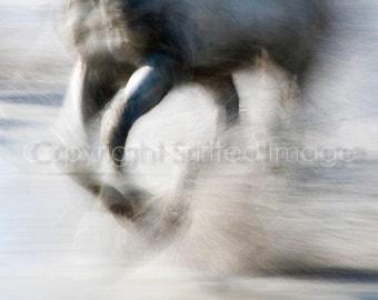 CAMARGUE HORSE, 7.5x5in Print - SPRAY  Equine Photography, Abstract action, Beach, Sea, Wall decor