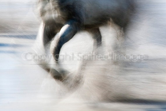 CAMARGUE HORSE, 7.5x5in Print - SPRAY  Equine Photography, Abstract action, Beach, Sea, Wall decor