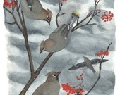 Bird Card - The Feast: Bohemian Waxwings on Mountain Ash, from watercolor, with fruit-eating birds in a holiday-esque setting