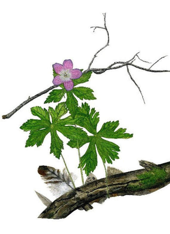 Wildflower notecard watercolor Geranium maculatum on blank art card