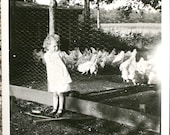 Vintage 1930s black and white photograph snapshot cute little curly haired FARM GIRL with CHICKENS photo ephemera