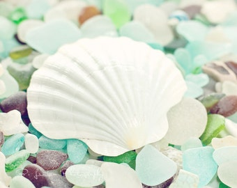 Beach Glass Photography - Sea Glass Photograph - Scallop Shell Photograph - Shell - Fine Art Photography Print - Green Blue White Home Decor