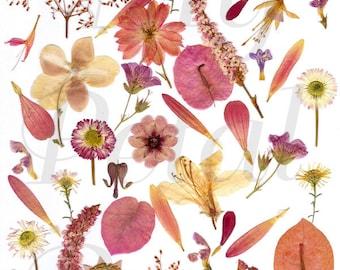 Digital Download Pink Pressed Flowers Collage Print