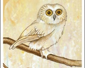 OWL PAINTING art greeting card from an original nature painting by Jennifer Barrineau of a Saw Whet Owl
