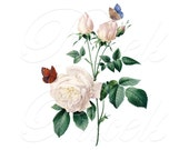 ROSES butterflies Illustration, Instant Download, white rose wedding clipart vintage wedding clipart Redoute 010