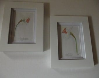 """Watercolor painting, """"Amsterdam Daffodils"""", framed"""