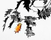 Black & White Abstract Autumn Fall Leaves Photograph Silver Metallic