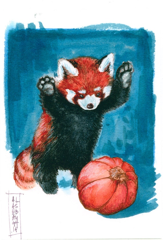 Red panda with pumpkin ink drawing - Panda roux dessin ...