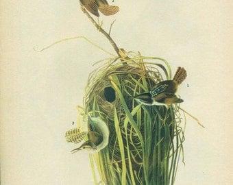Old 1941 Antique Vintage Book JOHN JAMES AUDUBON - Birds of America - Antique Bird - Vintage Bird - Marsh Wren