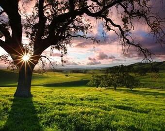 Mt. Diablo, California, landscape photography. Oak tree photograph, hiking, sunset, green grass, pink, orange yellow, clouds fine art photo
