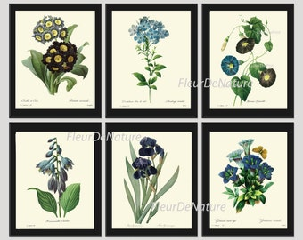 BOTANICAL Print SET of 6 Art Print  Redoute Antique French Garden Blue Iris Butterfly Plants Spring Summer Vintage Room Wall Home Decor