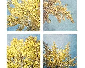 Set of 4 SEOUL Ginkgo - Photographic print - yellow, blue, fall, autumn, bohemian, boho, art, asia, decor, square, 12 x 12, 16 x 16 20 x 20