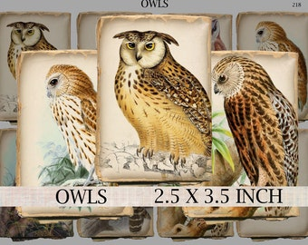 Owls digital collage sheet 2.5 x 3.5 inch atc aceo size shabby tattered paper vintage images of birds of prey