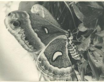Butterfly moth vintage close up art insect photo