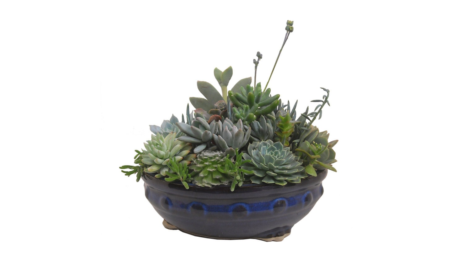Succulent Arrangement Centerpiece 8 Round Ceramic Planter