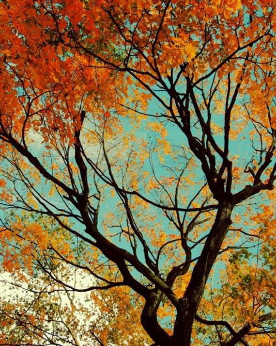 Cheerful autumn foliage autumn tree photograph nature for Cheerful nature