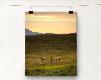 Wildlife Photograph, Deer Photo, Alberta Animals, Country, Mountains