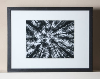 Pine Trees Reaching for the Sky, Black and White Print, 8x10