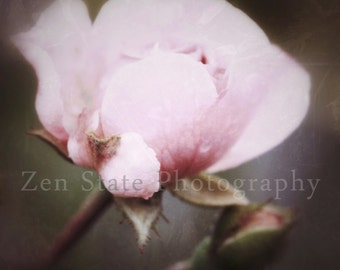 Pink Rose Wall Decor. Macro Photography Print. Nature Photography. Flower Photo Print, Framed Photo, or Canvas Print. Home Decor.