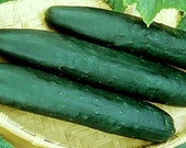 75 - Heirloom Cucumber Seeds - Straight 8 - Heirloom Straight Eight Cucumber Seeds, Heirloom Vegetable Seed, Non-GMO Cucumbers, Non-gmo Seed