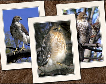 3 Hawk Photo Note Card Set - 5c7 Hawk Note Card - Blank Bird Note Cards With Envelopes - Bird Greeting Cards Handmade (BD9)
