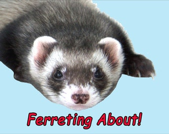Ferret Fridge Magnet 7cm by 4.5cm, Ferreting About